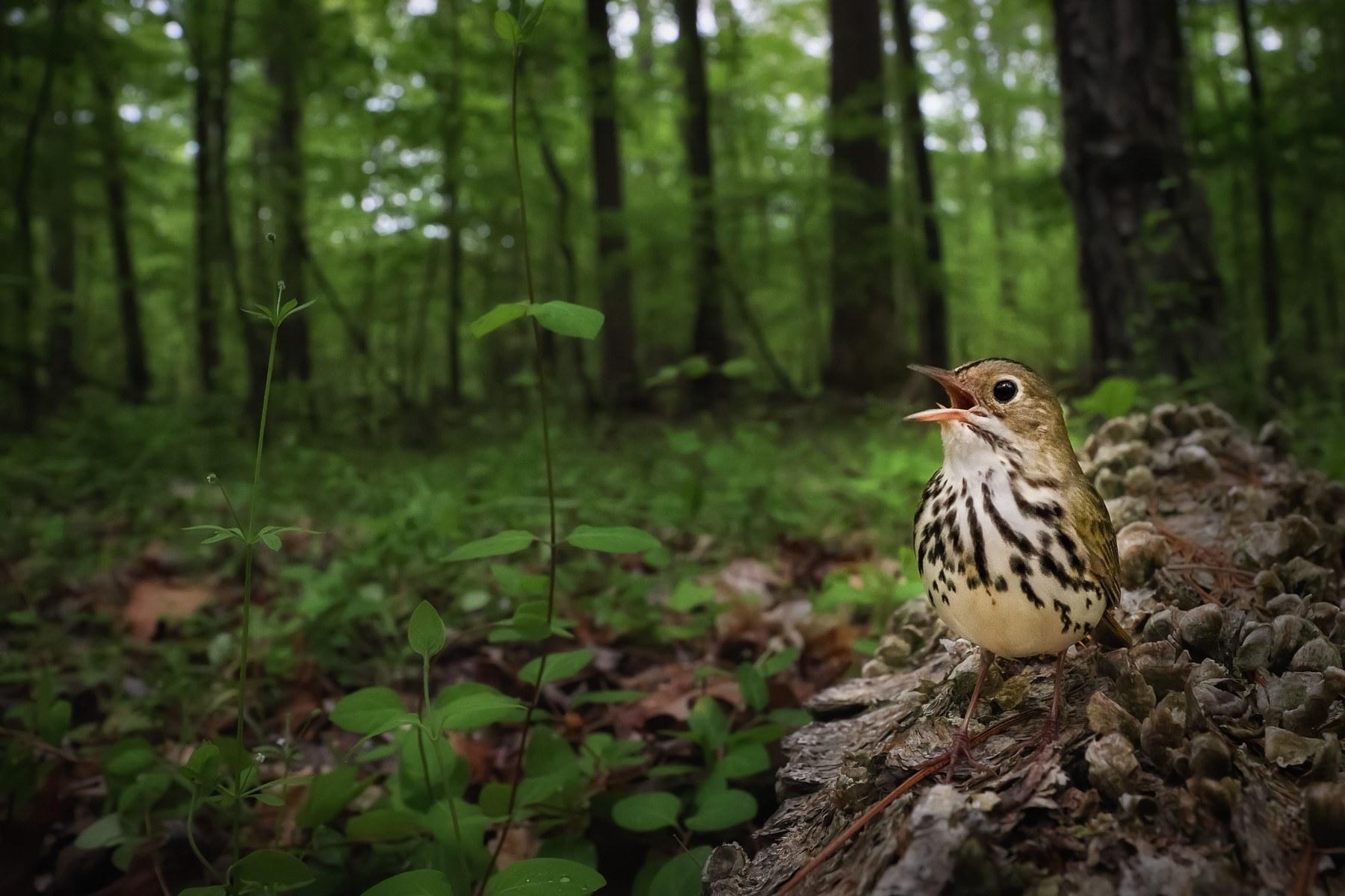 Silver winner: Birds in the Environment
