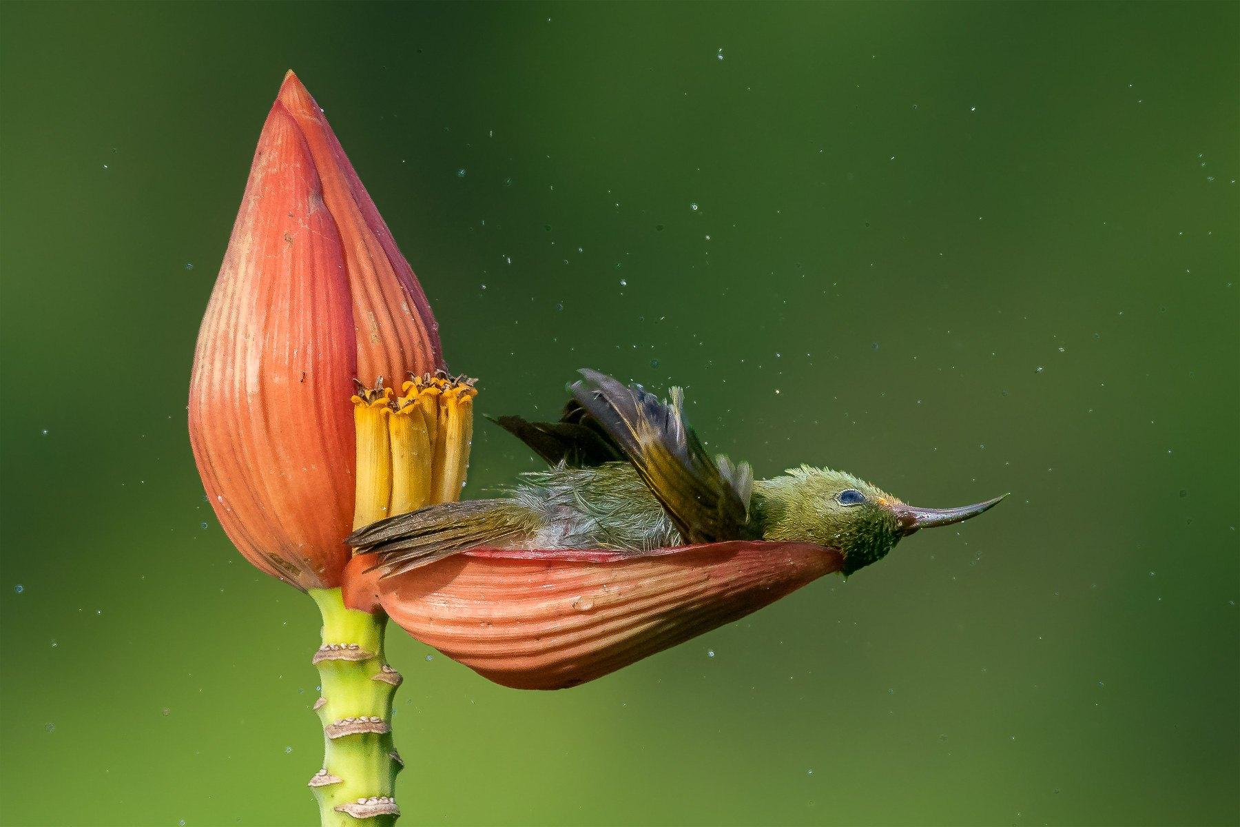 Gold winner: Bird Behavior