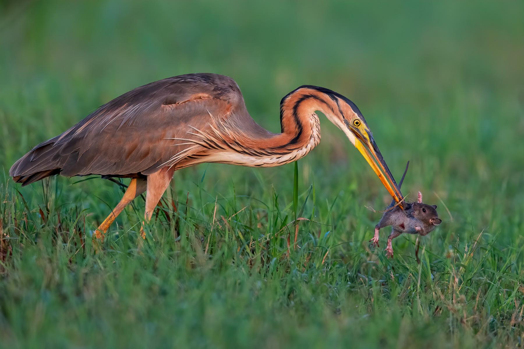Silver winner: Bird Behavior