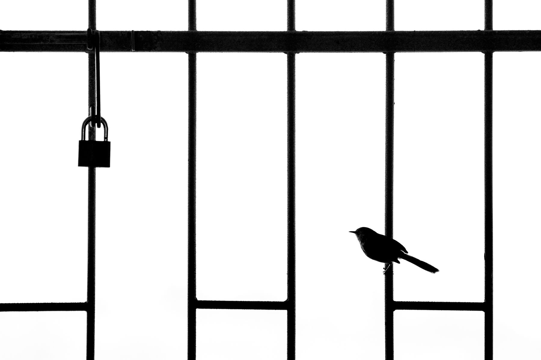 Silver winner: Urban Birds