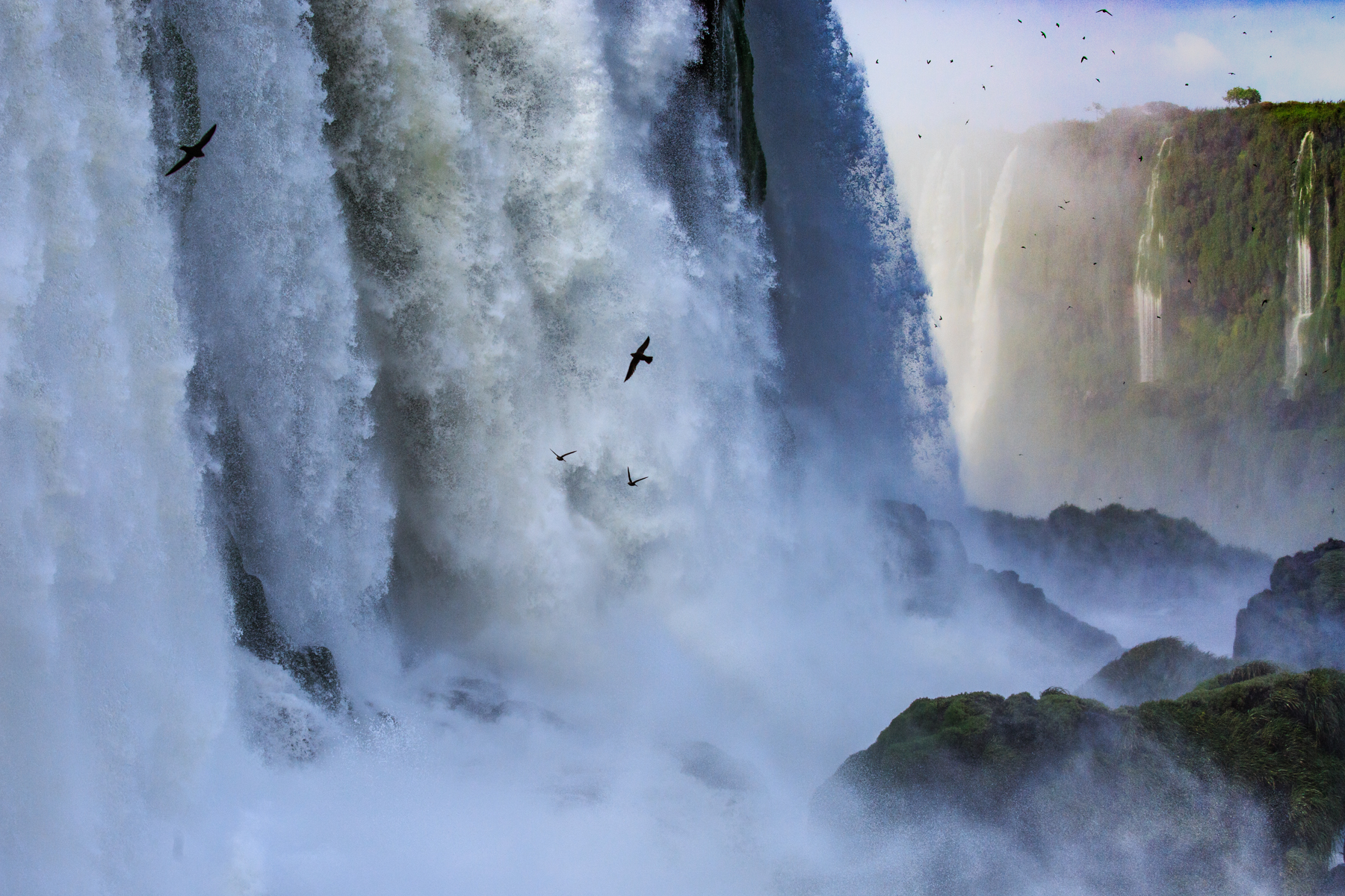 Swifts in the Waterfall
