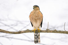Hawk Mountain Sanctuary, Kempton, Pennsylvania
