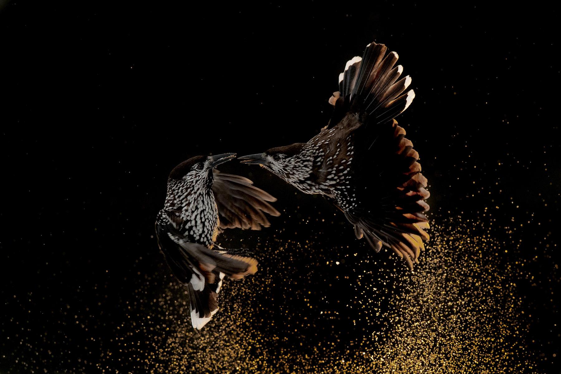 Bird Behavior Gold Award
