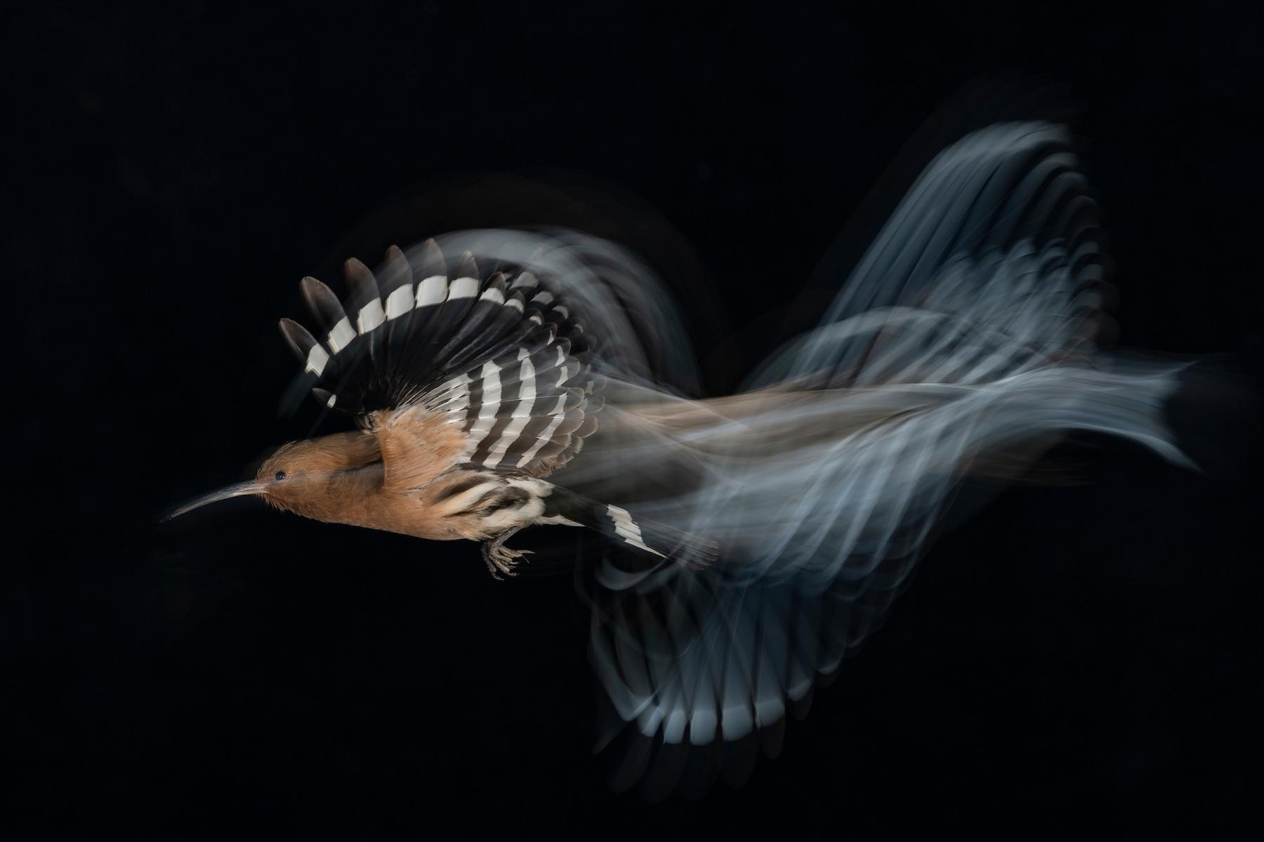 Birds in Flight Gold Award