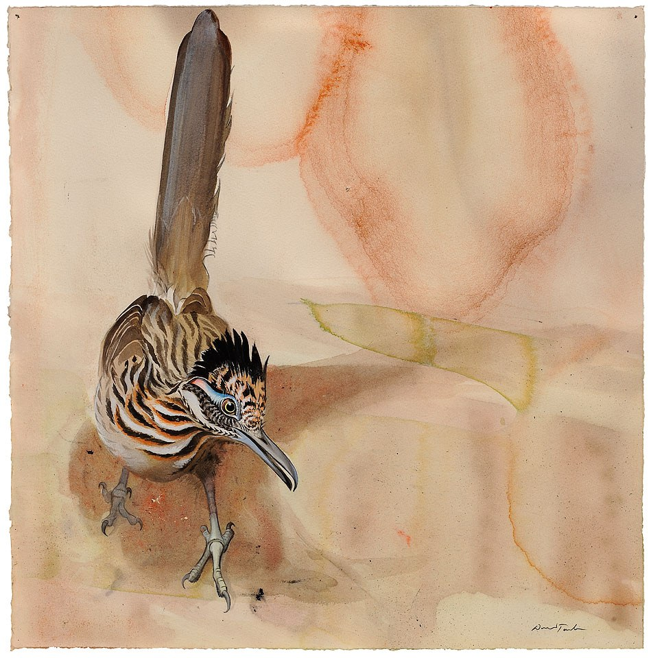 Watercolor of Greater Roadrunner by David Tomb