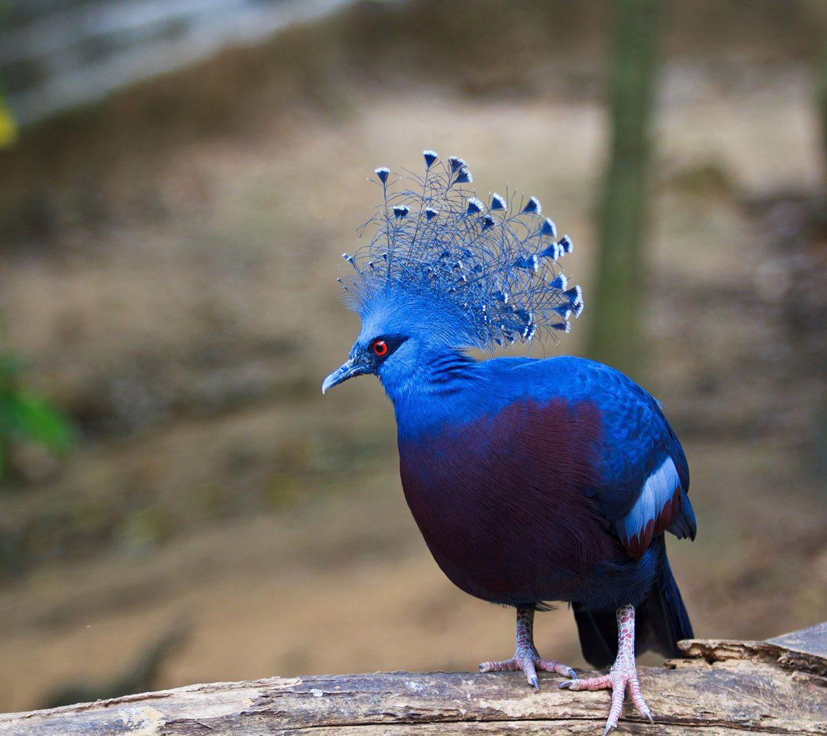 2. Pigeons
