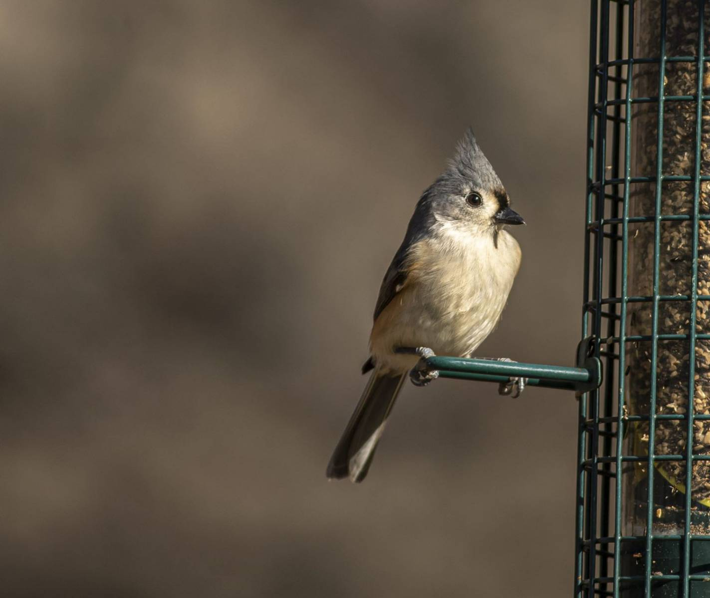Tufted Titmouse by Ty Mcknight