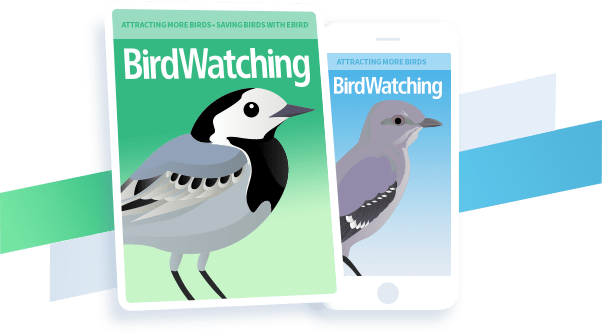 Submission guidelines - BirdWatching