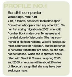 craneprofile01.ashx