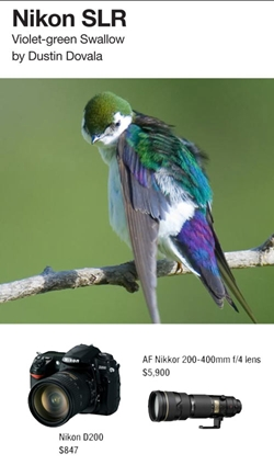 Violet-green Swallow. Photographed by Dustin Dovala with Nikon D200 and AF Nikkor 200-400mm f/4 lens.