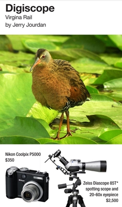 Virginia Rail. Digiscoped by Jerry Jourdan with Nikon Coolpix P5000 and Zeiss Diascope 85T*.