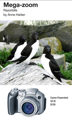 Razorbills. Photographed by Anne Harlan with Canon Powershot S2 IS.