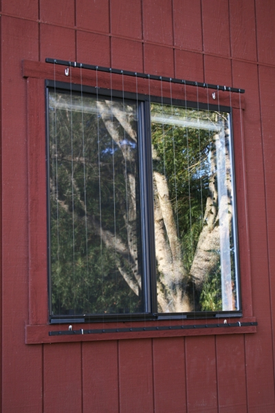 Prevent birds from hitting windows with these products