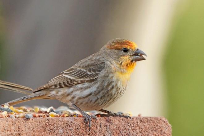 Birdwatching-060