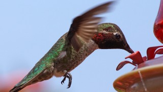 Birdwatching-062