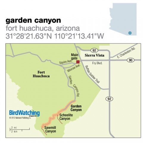 136. Garden Canyon, Fort Huachuca, Arizona