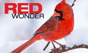 RedWonder