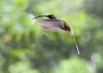 00036_Bird_Hummer22