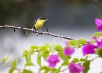 00145_Bird46