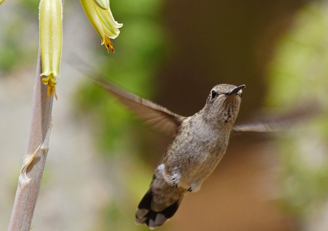 Birdwatching-71.-May-8-2013