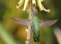 Birdwatching-73.-May-8-2013