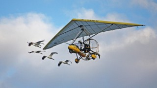 Whooping_cranes_w_ultralight-660