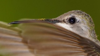 Birdwatching-77.-May-16-2013