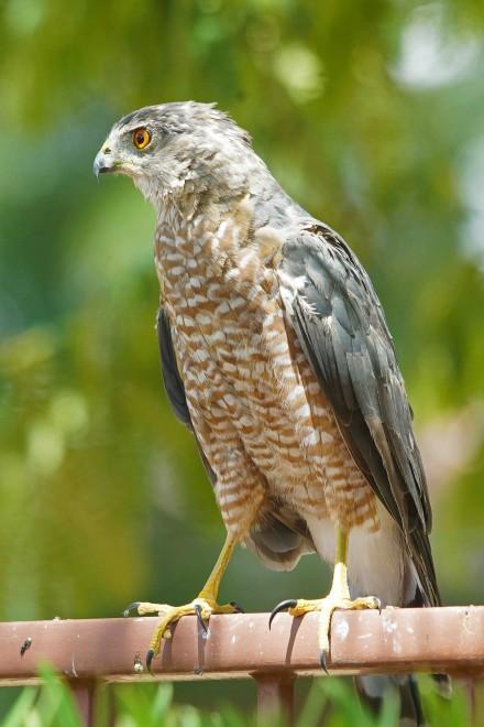 Birdwatching-79.-1-80-F8-ISO320