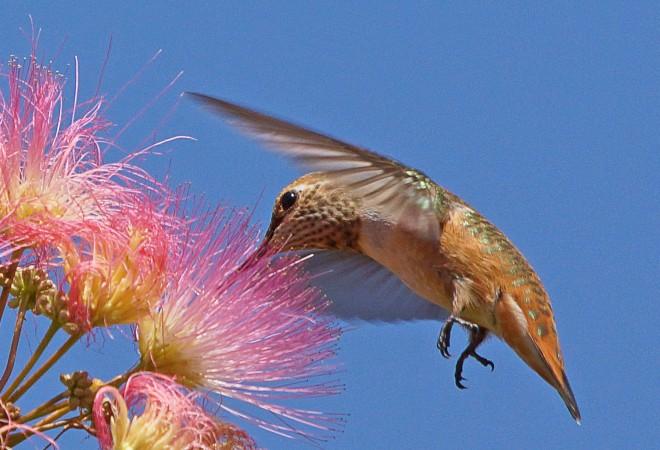 Birdwatching-82