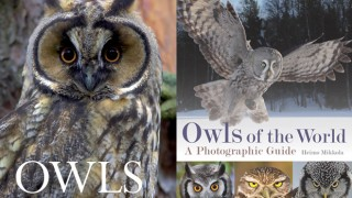 OwlCovers