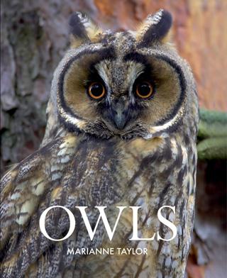 Taylor_Owls