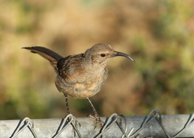 Thrasher-California-2013-08-04-172
