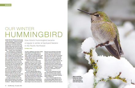 WinterHummingbirdLayout