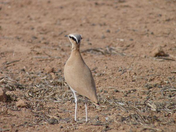corredor-sahariano