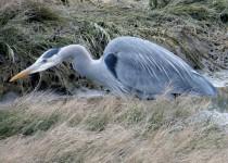 3-2-2012-birds-006