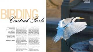 Birding-Central-Parkw