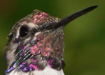 Birdwatching-100
