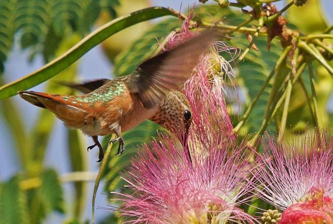 Birdwatching-83