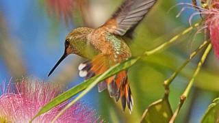 Birdwatching-84