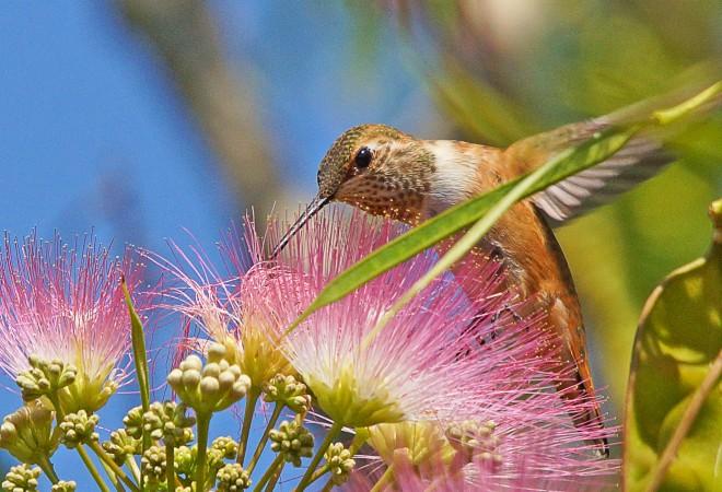 Birdwatching-85