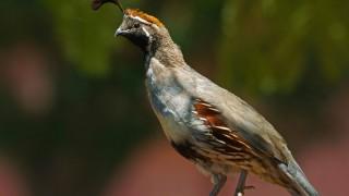 Birdwatching-90