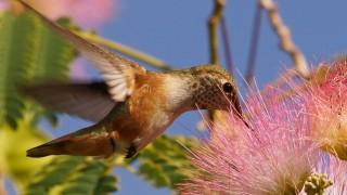 Birdwatching-91