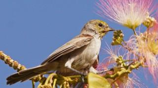 Birdwatching-94