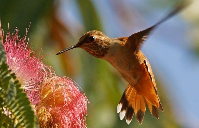 Birdwatching-951