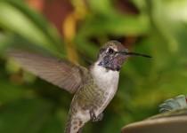 Birdwatching-99