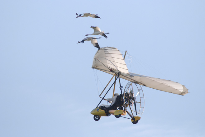 Ultralight-with-Cranes