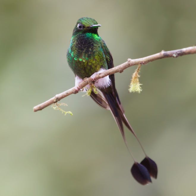 booted-racket-tail-4844