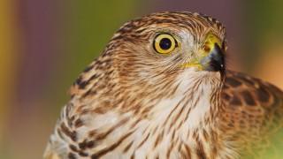 Birdwatching-108