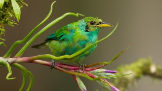 Costa-Rica-slideshow-1-28-123-051