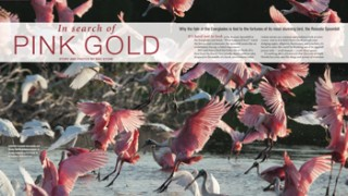 In-Search-of-Pink-Gold-Original